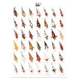 Poster Carpas Japonesas KOI 3