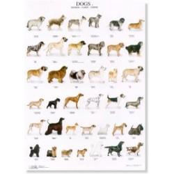 Poster Perros 3