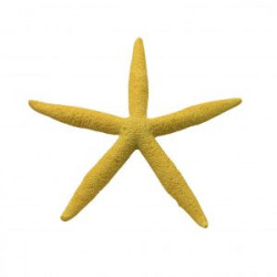 Estrella de mar Amarillo