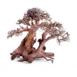 Bonsái con raíz amplia