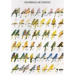 Poster Neophemas