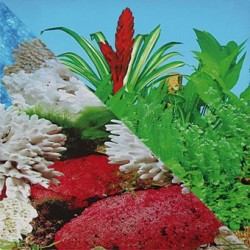 Fondo decorativo Pacifico / Dulcina