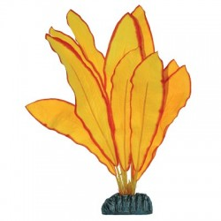 Planta de seda Echinodorus Amarillo