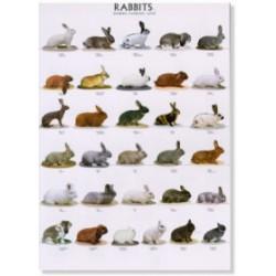 Poster Conejos 1