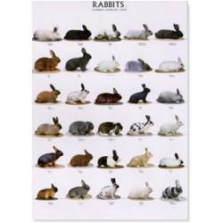 Poster Conejos 2