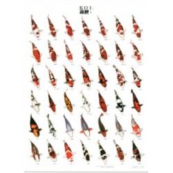 Poster Carpas Japonesas KOI 1