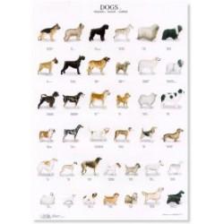 Poster Perros 1