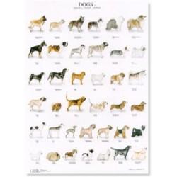 Poster Perros 2