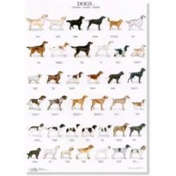 Poster Perros 4