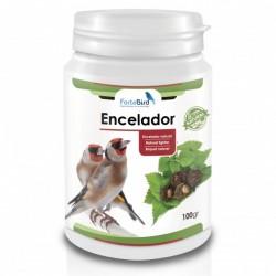 ENCELADOR NATURAL (Ortiga + Maca negra)