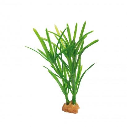 Planta 'MAGIC6 PLANTS' (3unid)
